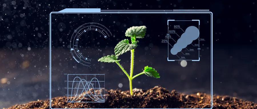 金融科技在农业供应链金融中的应用及完善